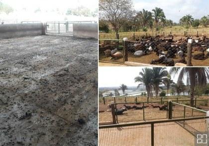 Produção sustentável de ovinocultura